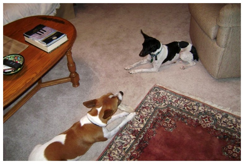 Bed Bug Detection Dogs Uk