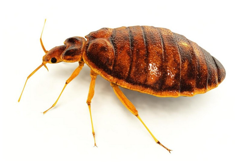 Bed Bug Supply Reviews