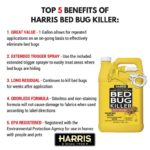 Best Carpet Steam Cleaner For Bed Bugs