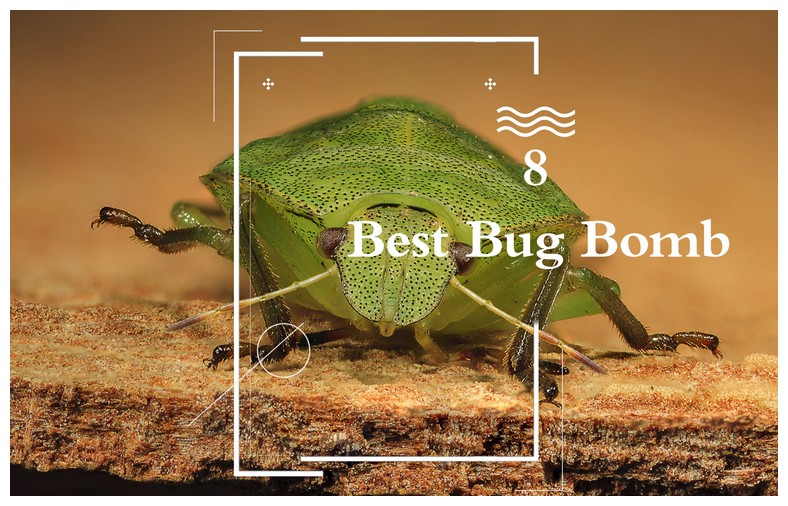 Best Products To Kill Bed Bugs