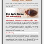 How Can You Permanently Get Rid Of Bed Bugs?