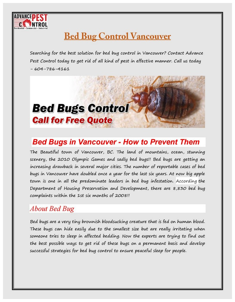 How Can You Permanently Get Rid Of Bed Bugs