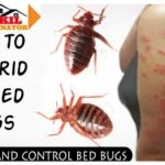 How To Get Rid Of Bed Bugs Yourself?