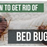 How To Get Rid Of Bed Bugs Yourself With Heat?