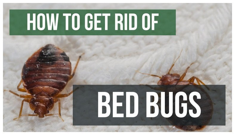 How To Get Rid Of Bed Bugs Yourself With Heat