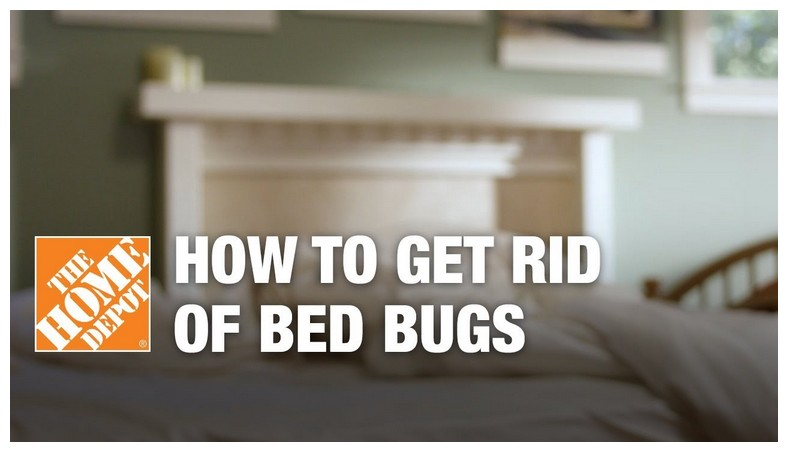 How To Kill Bed Bugs With Heat Diy