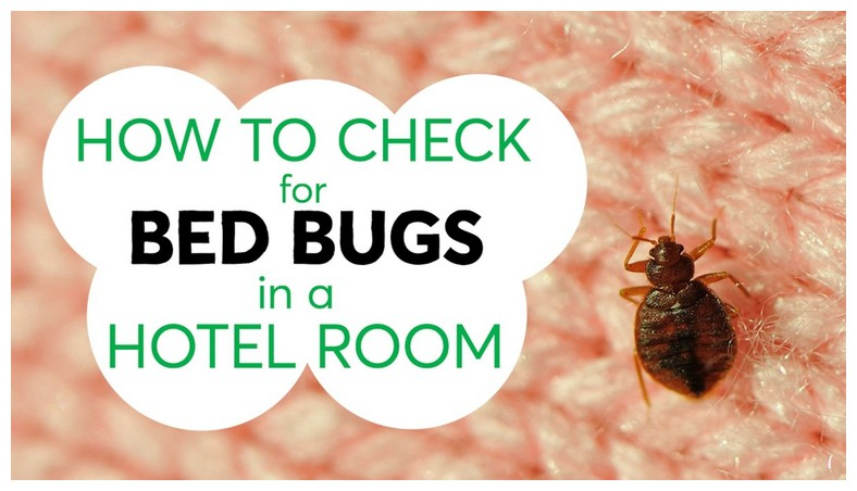 How To Kill Bed Bugs With Heat In The Dryer