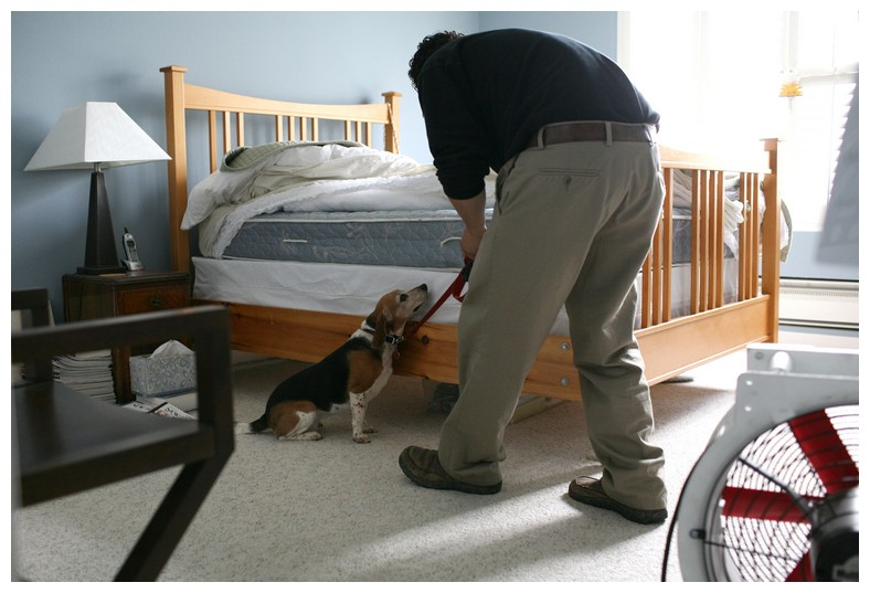 Orkin Bed Bugs Cost