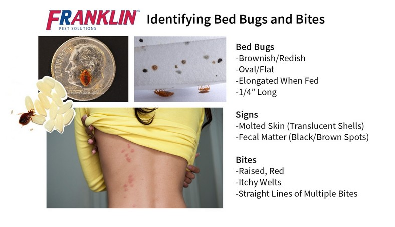 Treatment For Bed Bugs On Skin