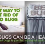 Ways To Get Rid Of Bed Bugs For Good.