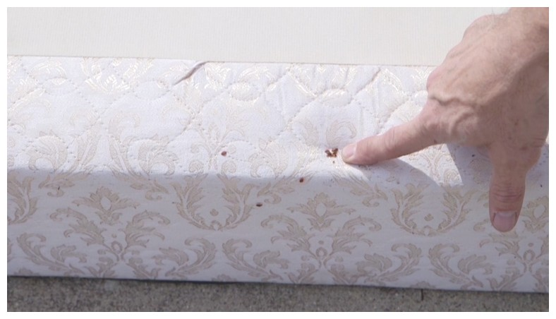 Ways To Get Rid Of Bed Bugs Yourself