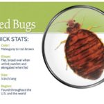 What Do Bed Bug Bites Do To You?