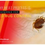 What Will Kill Bed Bugs Instantly?