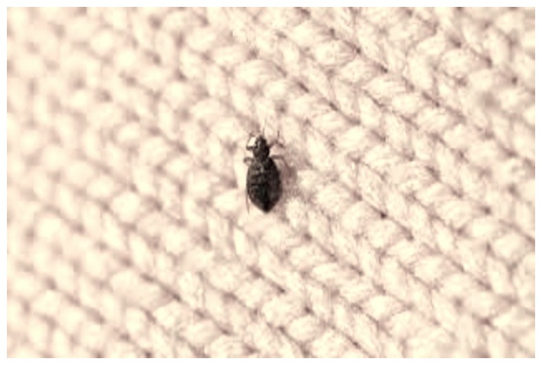 Bed Bug Chemicals