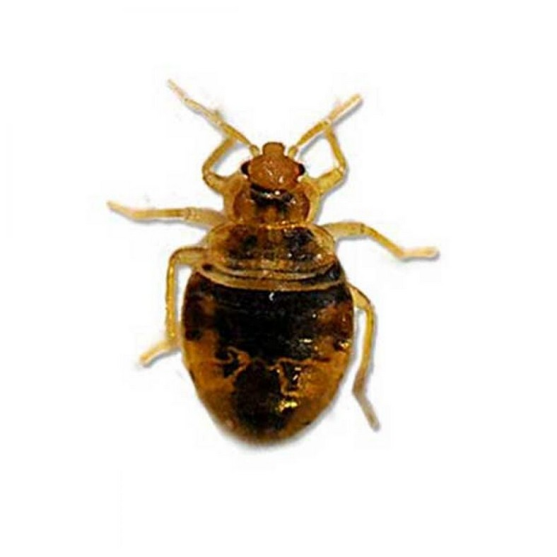 Bed Bug Pest Control Companies Near Me