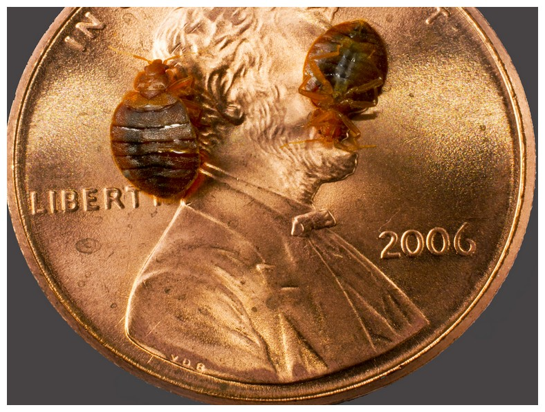 Bed Bugs Transfer From Person To Person