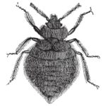 Best Bed Bug Pest Control Near Me