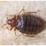 Does Extreme Cold Kill Bed Bugs