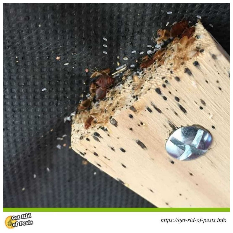 Easy Way To Get Rid Of Bed Bugs