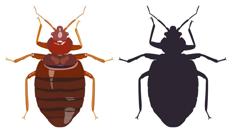 Fastest Way To Get Rid Of Bed Bugs