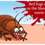 How Do You Bed Bugs In Your House?