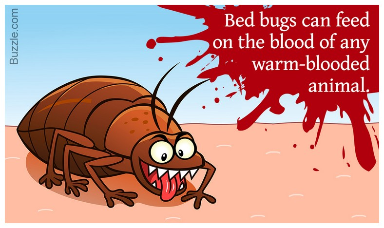 How Do You Bed Bugs In Your House