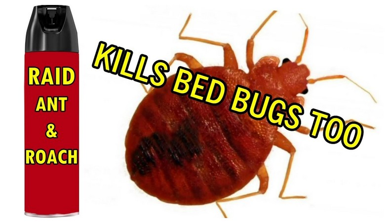 How Do You Get Rid Of Bed Bugs In Your House