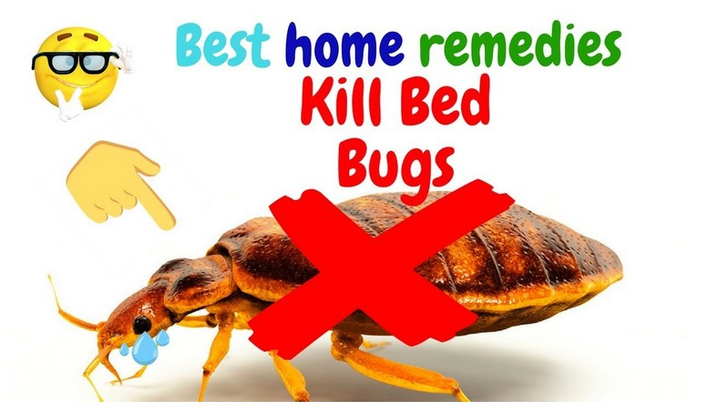 How Hot To Kill Bed Bugs