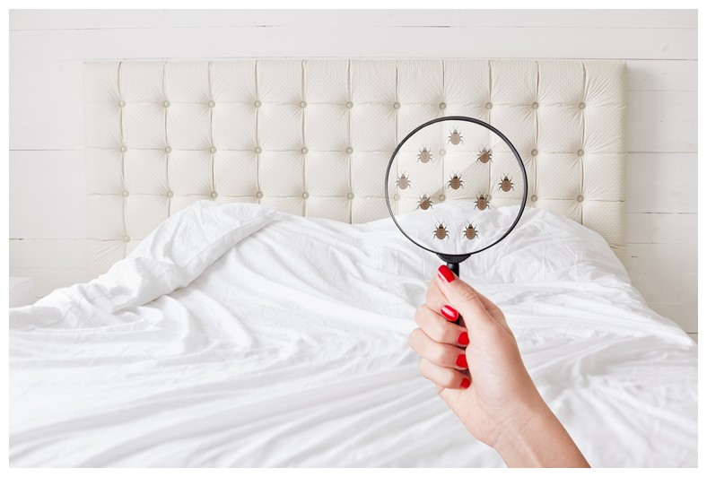 How Much Do Heat Treatments Cost For Bed Bugs