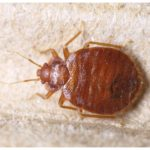 How Much Does A Bed Bug Heat Treatment Cost?
