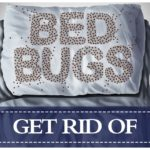 How To Get Rid Of Bed Bugs In A House?