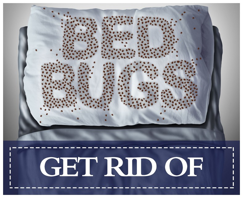 How To Get Rid Of Bed Bugs In A House