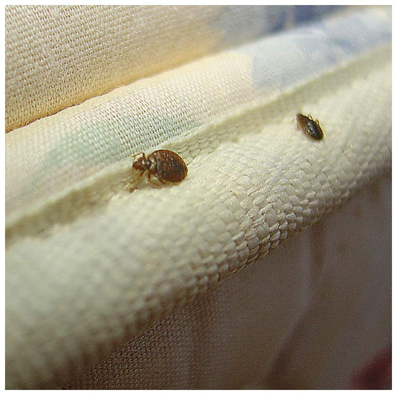 How To Get Rid Of Bed Bugs In Clothes