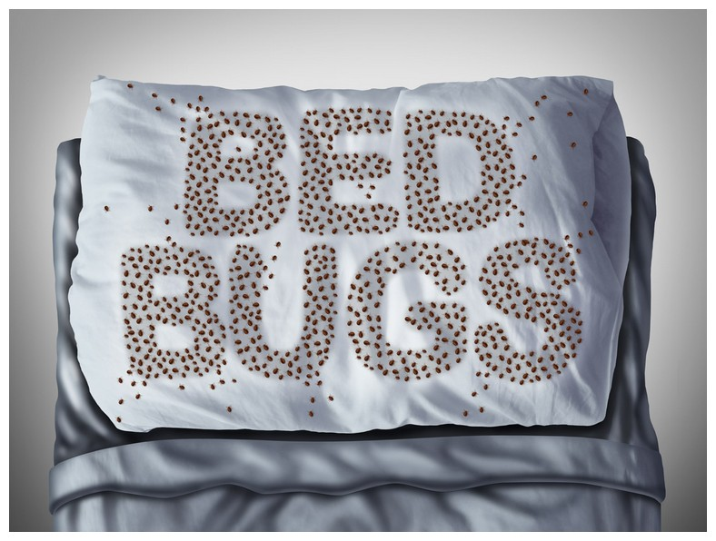 How To Get Rid Of Bed Bugs In Empty House