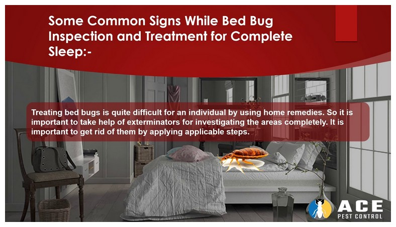 How To Get Rid Of Bed Bugs In House Home Remedies