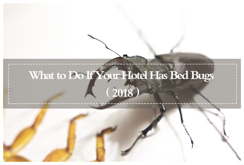 How To Get Rid Of Bed Bugs In House India