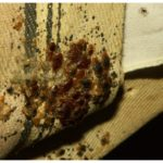How To Heat Your Home To Get Rid Of Bed Bugs?