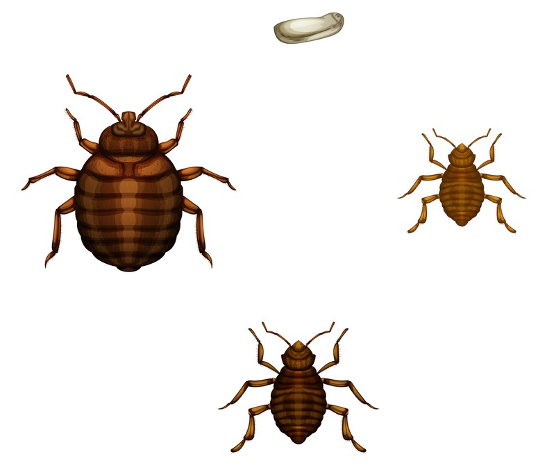 How To Kill Bed Bug Eggs With Heat