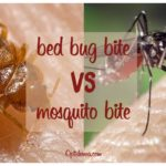 How To Repel Bed Bugs From Biting?