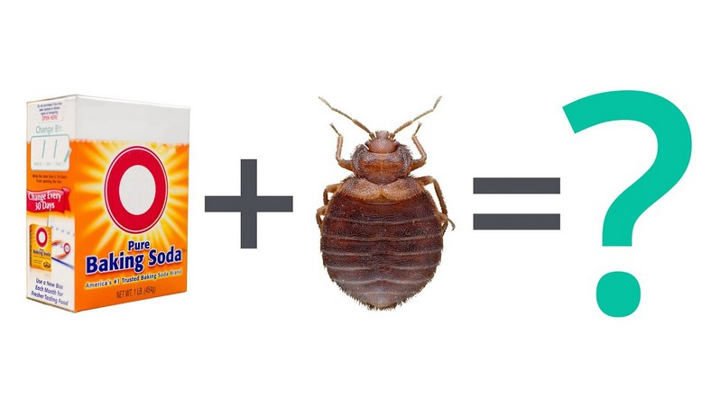 Medicine For Bed Bug Allergy