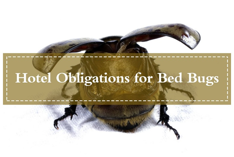 What To Use To Get Rid Of Bed Bugs Yourself