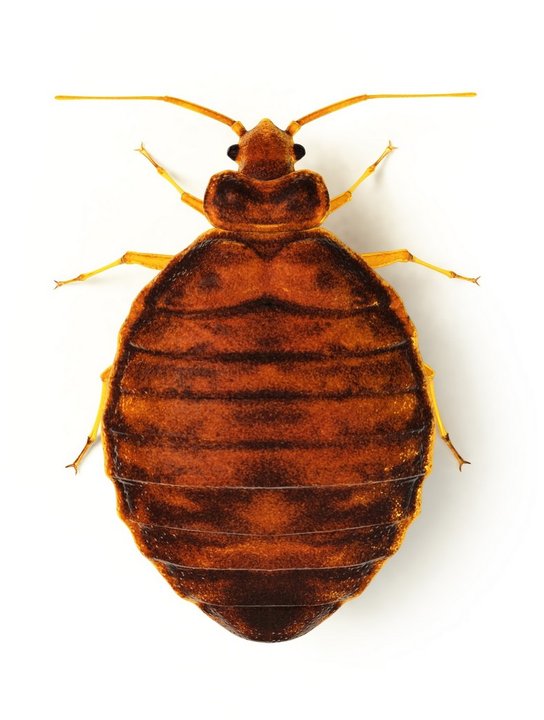 Will Cold Temps Kill Bed Bugs
