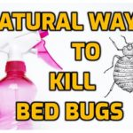 Alcohol Kills Bed Bugs On Contact