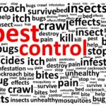 Bed Bug Exterminator Toronto Price