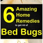 Bed Bugs In Luggage Prevention