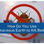 Best Way To Kill Bed Bugs Naturally!