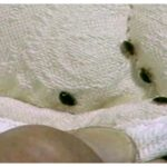 Cheap Bed Bug Exterminator Houston