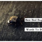 Home Remedy To Kill Bed Bugs And Their Eggs