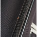 How To Get Bed Bugs Out Of Clothes And Luggage?