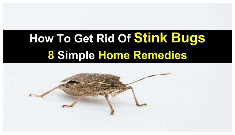 How To Get Rid Of Bed Bug Bites Overnight